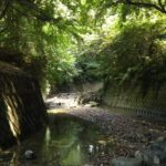 神奈川 川遊び,おすすめ 川遊び